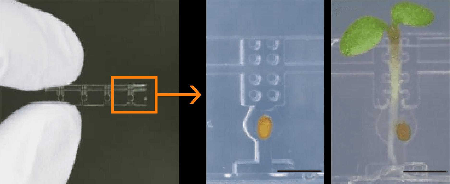 微細加工技術(MEMS)を駆使したバイオ分野の接木チップ